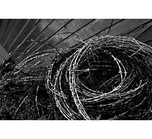 Barbed! Photographic Print