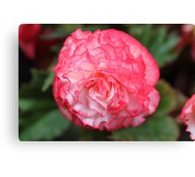 Pink and White Carnation Canvas Print