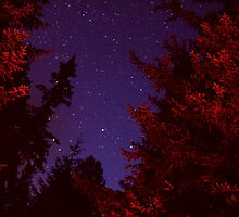 we made a fire by the river, the trees glowed with a golden red and the stars watched us dance by Eranthos Beretta