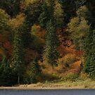 Wolf Camp Lake - near Marathon Ontario Canada on Lake Superior by loralea