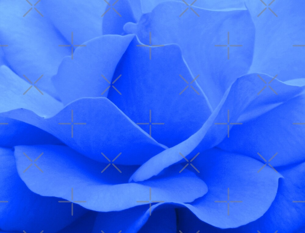 A blue rose - JUSTART © by JUSTART