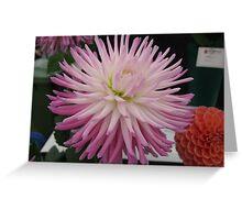 Pink Tipped White Chrysanthemum Greeting Card