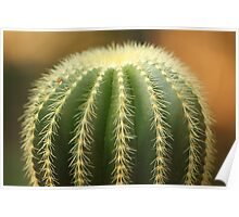 Green Cactus! Poster