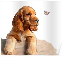 Cocker spaniel puppy & butterfly Poster