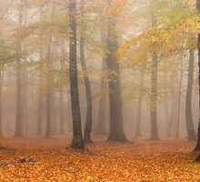 Magic Forest-Autumn In North Carolina by Donna Eaton