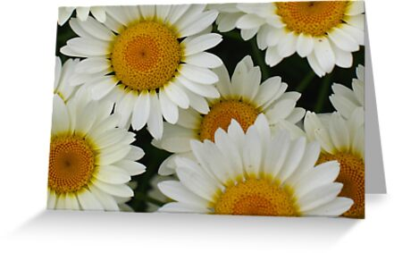 Happy Daisy  - JUSTART © by JUSTART