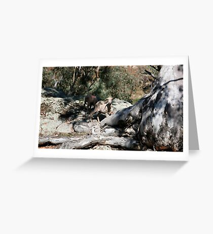farmscapes #24, well rooted  Greeting Card
