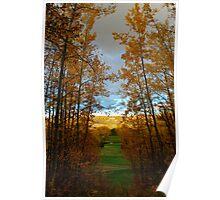 Nature Sings Poster