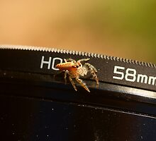 Lens Baby by burnettbirder