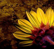 Autumn Sunflower by myrbpix