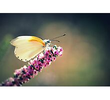 Spring butterfly Photographic Print