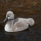 No ugly duckling by AFogArty