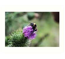 Bee on a Thistle Art Print