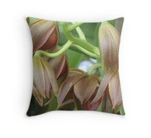 Chocolate Orchids Opening   Throw Pillow