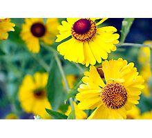 Yellow Wild Flowers Photographic Print
