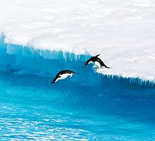 Adelie Penguin  Leap of Faith by Michael S Nolan