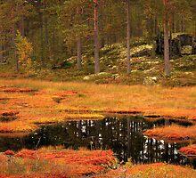 Autumn Lake Norra Långtjärn by Jo Nijenhuis