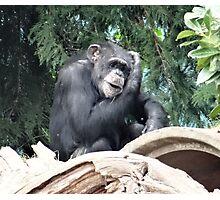 Ape Ideas Photographic Print