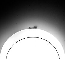 Gecko by Laurent Hunziker