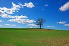 Field in Early Spring by Martins Blumbergs