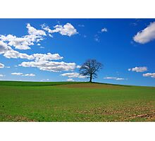 Field in Early Spring Photographic Print