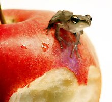 Golden Tree Frog on red apple by MiqeMorbid