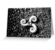 Black and White Sea Snais Greeting Card