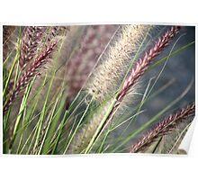 Simplicity Reeds... Poster