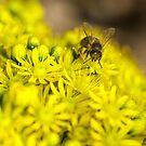 Busy as a bee by Pirostitch