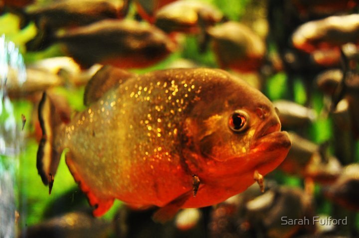 Fish  Eye by Sarah Fulford