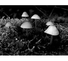 Magic Mushroom Photographic Print
