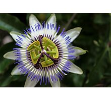 Passion Flower Photographic Print