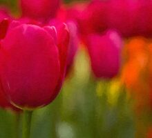 Red tulips by bkkphotography