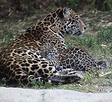Nursing Jaguar Cub by Gail Falcon