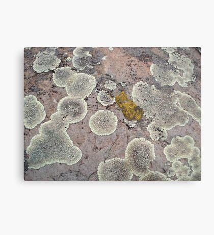 Lichens on Montana Granite Metal Print