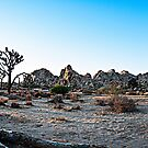 Joshua Tree National Park by Greg Amptman