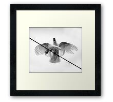 Variation On A Theme Of Cockatoos - The HDR Monochrome Experience Framed Print
