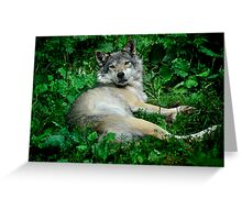 Canis Lupus - Grey Wolf Greeting Card
