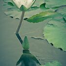 Big Shadow for a Little Bud by ElyseFradkin