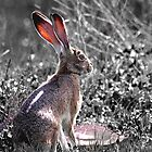 Tortoise and the Hare desaturated by Wingsdomain Art and Photography