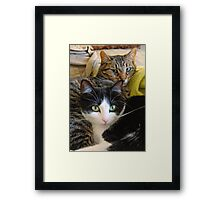 My Cats Penny and Baby Framed Print