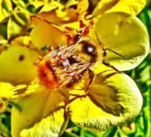 Elusive Bee Sticker