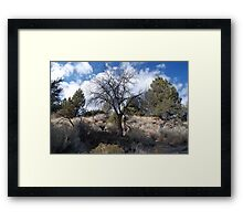 Tree, Lava Beds National Monument Framed Print
