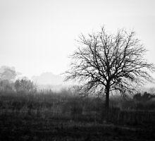Lone Tree by Guy Hoffman (aka creative365)