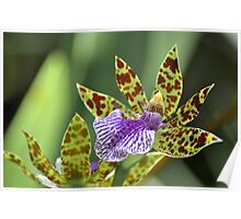 Macro Orchid Poster