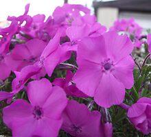 Purple Flowers by Becccaa