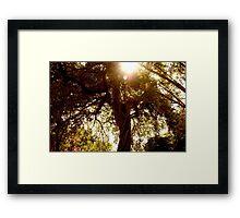 Floridian Jungle  Framed Print