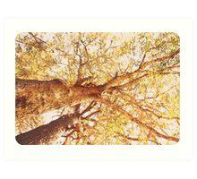 Sir Chestnut  Art Print
