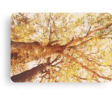 Sir Chestnut  Canvas Print