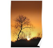 Silhouette of a Tree set in a Winter Sunset Poster